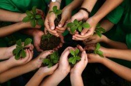 Green Teacher